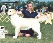 glory cream golden retriever