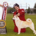 siv buhund best in show