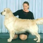 euchre pure bred retriever